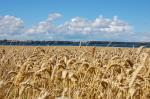 Denmark legally binds farmers to reduce GHGs emission by half in 9 years