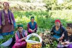 हिमाचल में प्राकृतिक खेती की उपज खरीदने की योजना तैयार