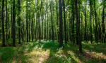 Proposed changes to Forest Conservation Act a larceny of village resources