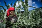 ऐसे भी किया जा सकता है जलवायु परिवर्तन का सामना, हिमाचल के किसानों ने दिखाया रास्ता