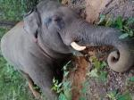 On same day, 3 elephants die in 2 Odisha districts