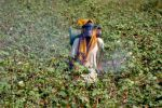 Pesticides Management Bill, 2020 will hurt farmers' livelihood, say experts