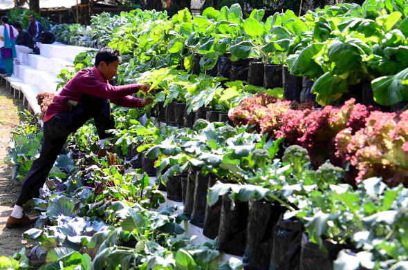 Small flower growers from the Himalayan state of Sikkim took centrestage at the recently concluded International Flower Show. Hosting participants from across India and the world, Sikkim showcased its natural advantage in growing low-volume and high-value produce, be it Cymbidium orchids or organic vegetables Photograph by: Sayantan Bera