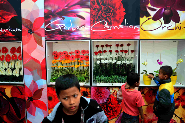 """Floriculture will have a catalytic effect on tourism—the biggest revenue earner for the people,"" says Shailesh Pradhan, a niche nursery owner from the state capital of Gangtok. But the focus should be on indigenous and unique varieties of Sikkim rather than just hybrid varieties imported from countries like Holland, adds Pradhan Photograph by: Sayantan Bera"