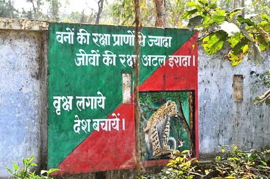 Tigers terai.ht
