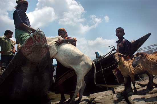 Relief ahoy: too little, too  latePhotograph by - BIJOY CHOWDHURY/DRIK INDIA/  Majorityworld