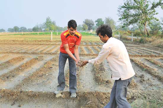 Decomposed excreta ready for applying  in field