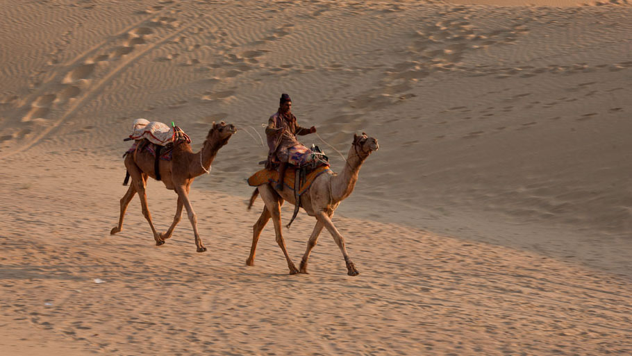 The camel is perfectly suited to the region's climate. It is a frugal water-drinker and grazes by browsing from one plant to another, allowing vegetation in arid regions to grow back easily. Camel-keeping is the traditional occupation of Raikas who have sold male camels for work on farms, carrying of loads, tourism and border patrol