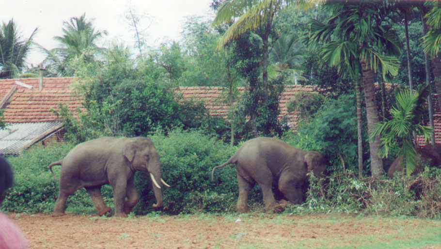 The Indian Railways might have adorable jumbo Bholu as its official mascot, but it cares little about its ilk. Since 1987, more than 130 elephants have been killed by trains in India, with nearly 90 per cent of the deaths concentrated in West Bengal, Assam, Odisha, Jharkhand and Uttarakhand (Photo: Sayantan Bera) Read story: Jumbo conflict