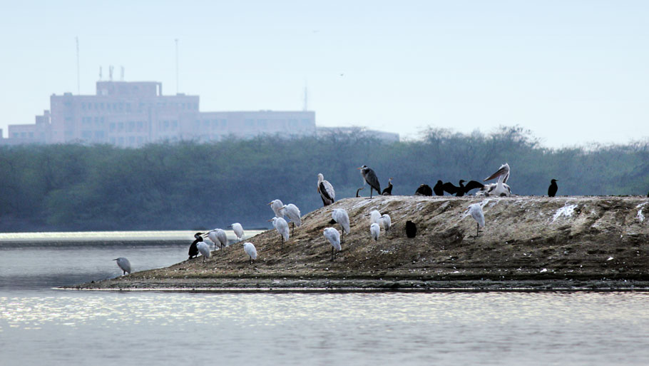 During an inspection in 2012, an environmentalist had found that sewage and other effluents were being discharged into the lake by two colleges, leading to water pollution and siltation  Photograph by Kumar Sambhav ShrivastavaRead story: Bully among birds
