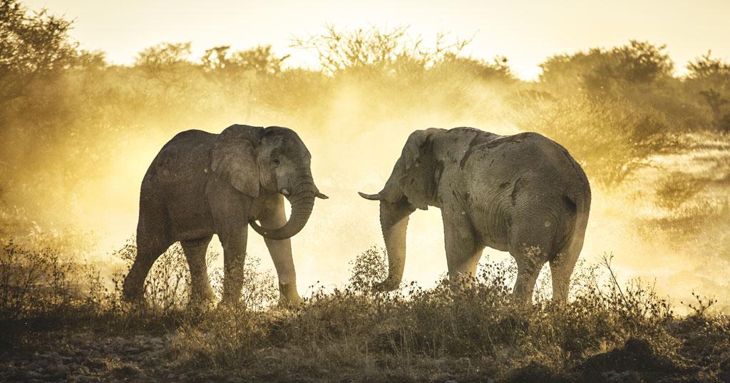 Elephantine block