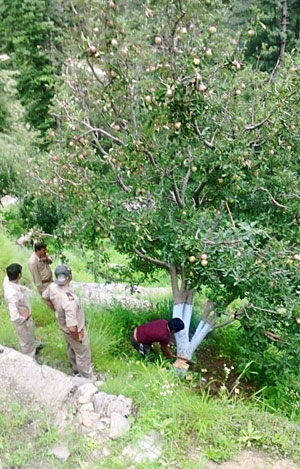 Forest department at work to root out apple trees in illegal orchards (Courtesy: Lalit Kumar)