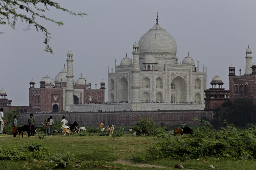 Goats graze and children play in the shadow of the Taj