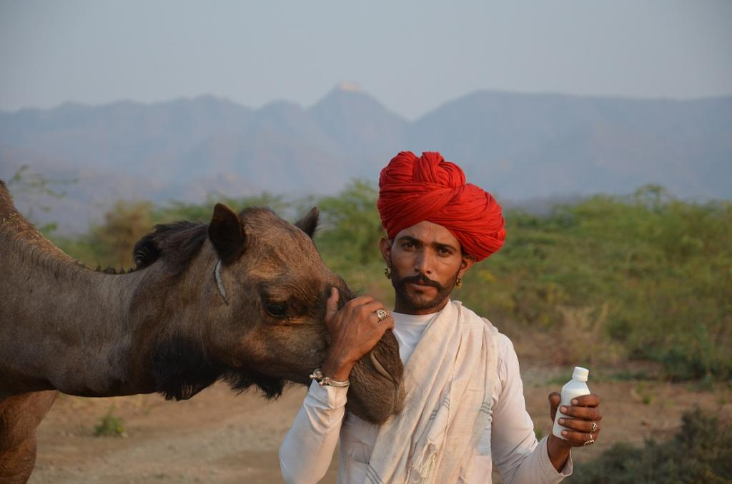 Bhanwarlal Raika earns Rs 50 per litre, or about Rs 500 a day and has already invested his profits in the purchase of a milking camel (Photo courtesy: LPPS)