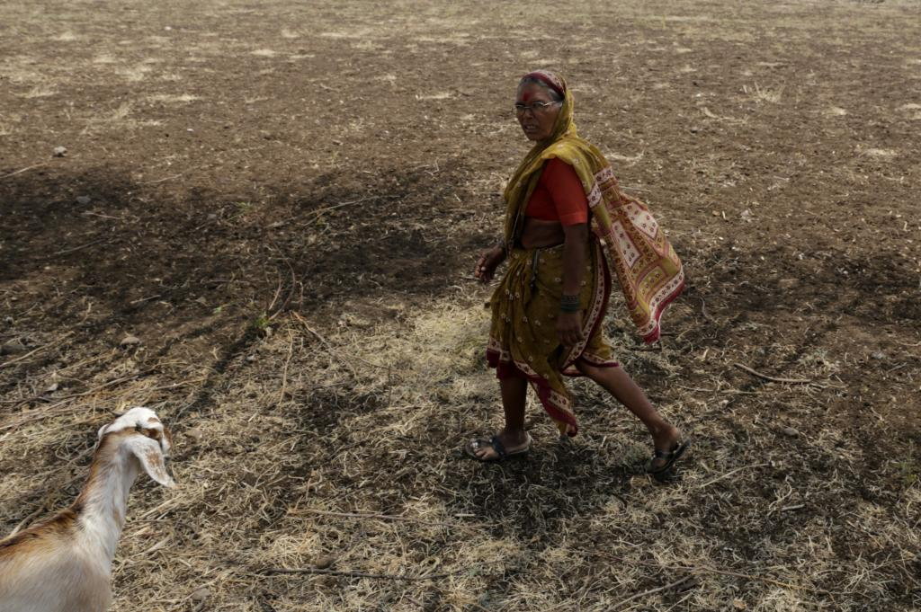 The Marathwada region is facing a drought-like situation for the fourth consecutive year