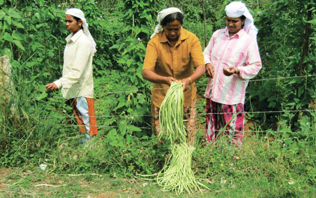 Kerala has employed women self-help groups under the Kudumbashree programme to revive farming in abandoned farmlands (Photo: Landesa)