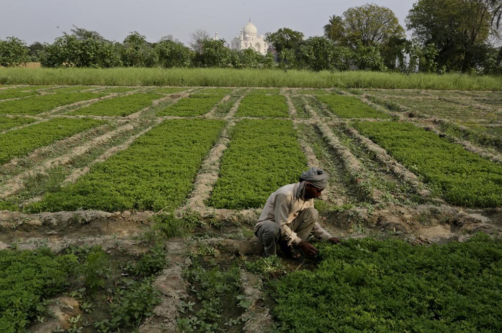 A farmer tends to his fields in the shadow of the Taj in Gajpura village