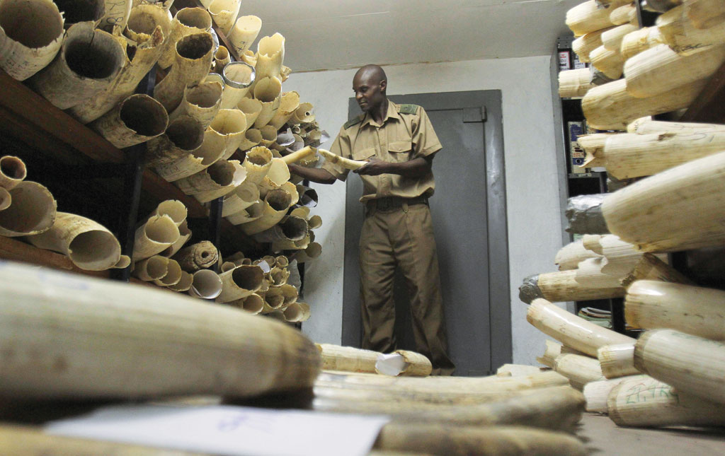 Zimbabwe has an ivory stockpile of more than 90 tonnes, worth US $13 million, which it wants to sell (Photo: Reuters)