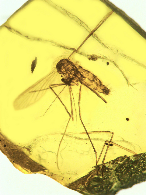 Did dinosaurs go extinct due to malaria?