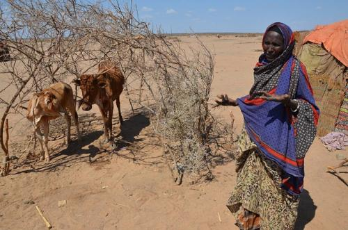 El Niño: Ethiopia faces worst drought in thirty years