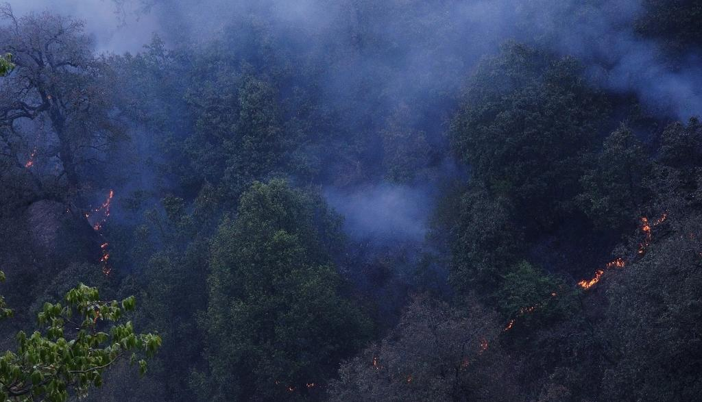An oak forest being ravaged by the Uttarakhand forest fire (Photo: Rajkamal Goswami)