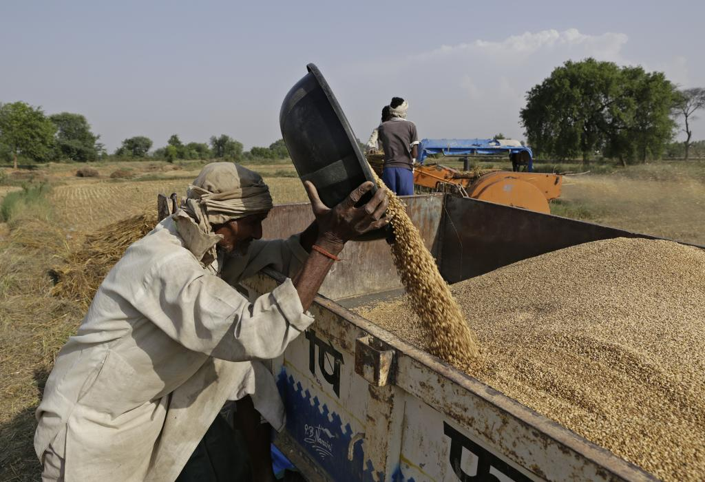 NFSA promises cheap food grains to 67 per cent of the Indian population Credit: Vikas Choudhary