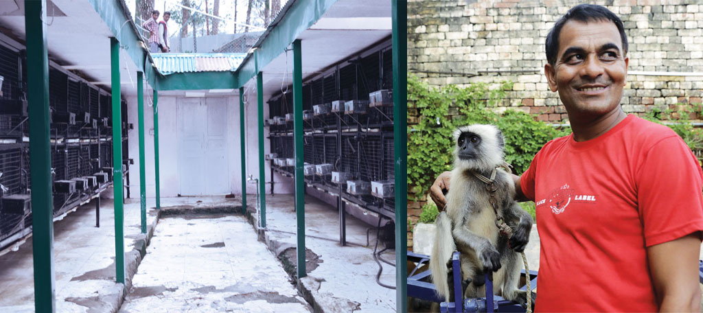 Cages lie empty at the