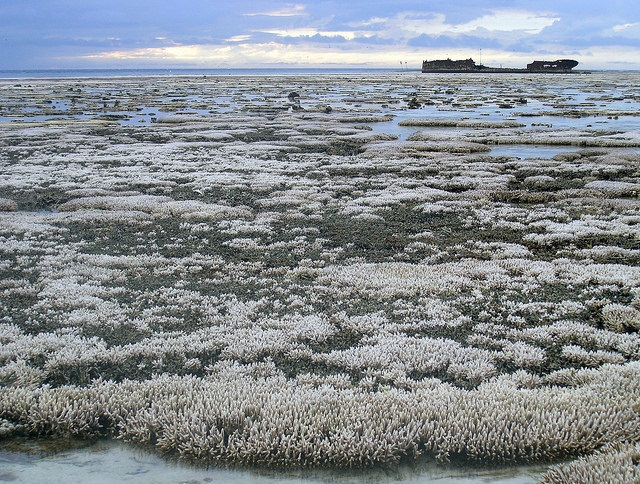 A major coral bleaching event took place on this part of the Great Barrier Reef in Australia. 