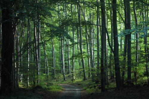 What India can learn from failure of European forests to mitigate climate change