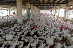 After Ebola, bird flu hits West Africa