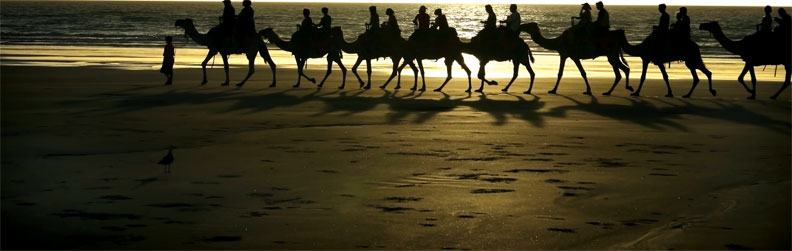 Between the 1860s and 1920s, 20,000 camels arrived in Australia and they were an integral part of scientific expeditions (THINKSTOCK)