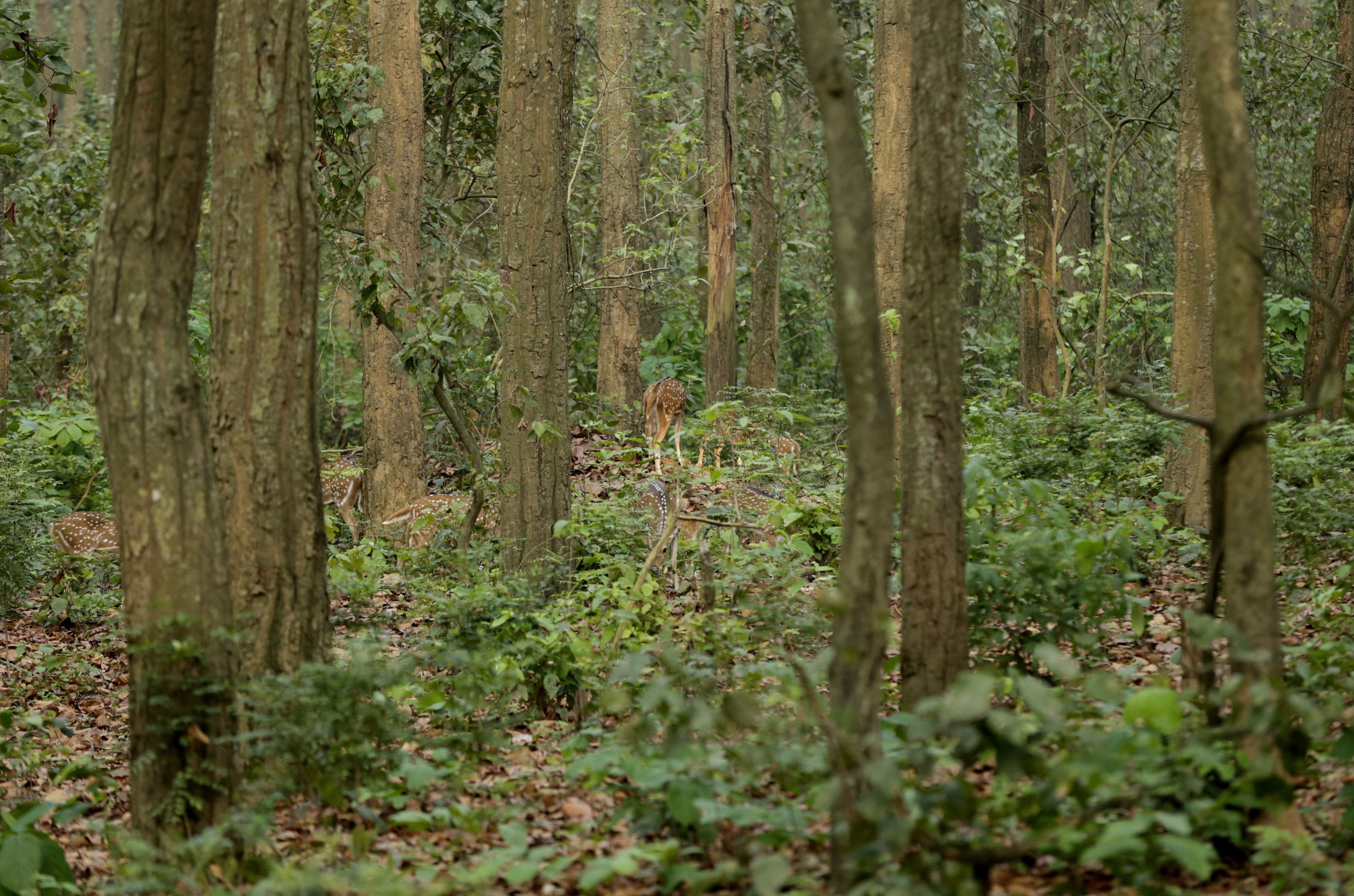 States with huge forest cover can rejoice that their efforts of maintaining good forests is paying in the form of enhanced allocation in taxes from the divisible pool Credit: Vikas Choudhary
