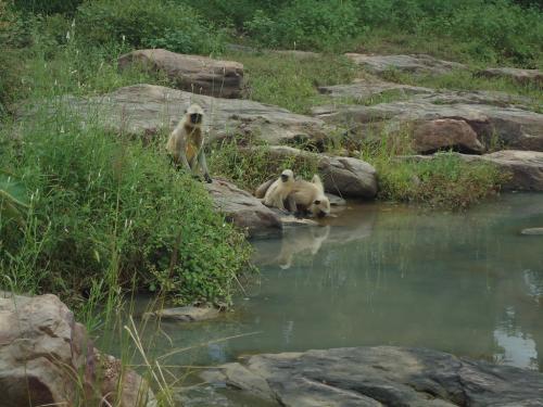 Madhya Pradesh government gives go-ahead to Ken-Betwa river link
