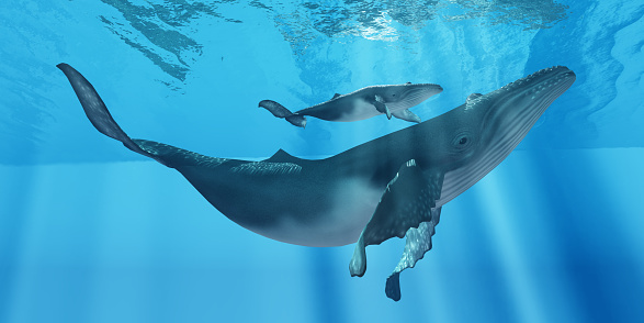 Humpback whale (Credit: Thinkstock)