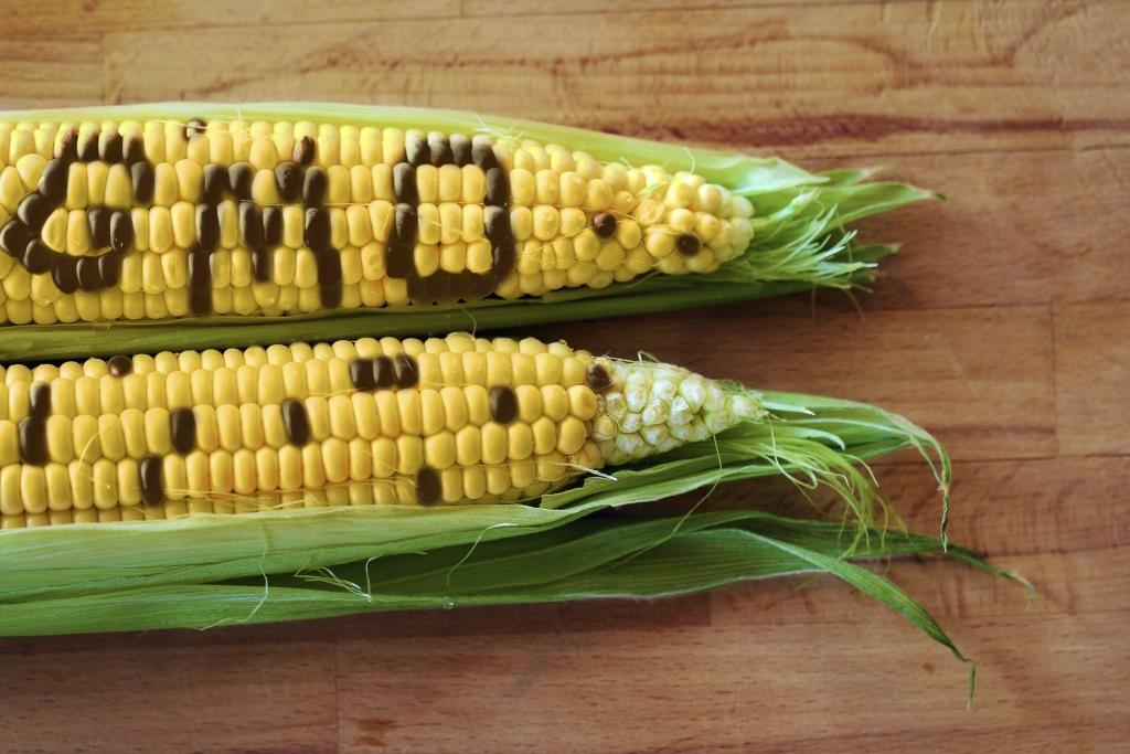 European lawmakers have rejected a proposal that would have allowed countries to restrict or ban use of imported GM crops with EU approval (Photo: Thinkstock)