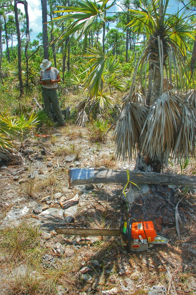 Shipwreck records and tree rings unveil Caribbean hurricane history—and clues to the future