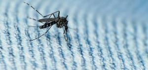 Zika: A growing health crisis