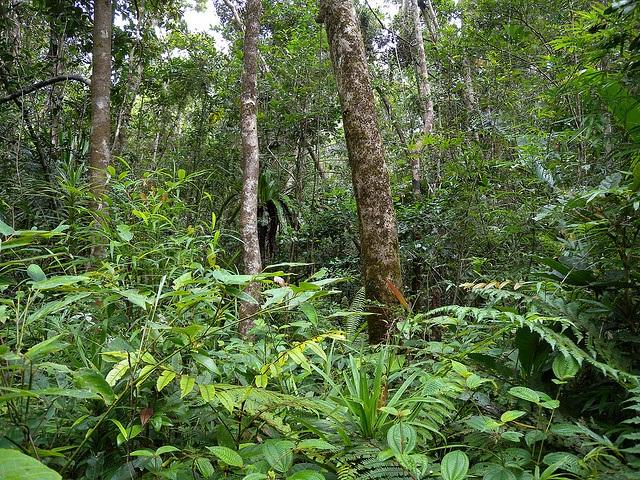 Tropical forests around the world are rich in biodiversity Credit: Frank Vassen/Flickr