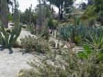 Thirty one per cent of world's cacti facing threat of extinction: IUCN