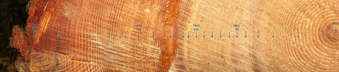 Experts are able to identify when droughts occur from tree rings, such as this cross-section of a 200-year-old tree. (Jason Hollinger/flickr CC BY)