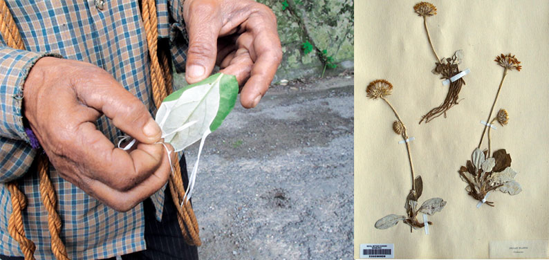 Cleghorn was interested in all