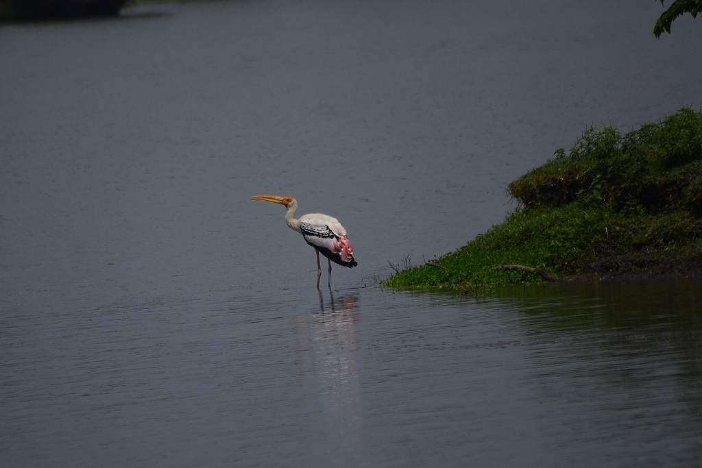 The lake serves as a foraging ground for resident as well as migratory birds