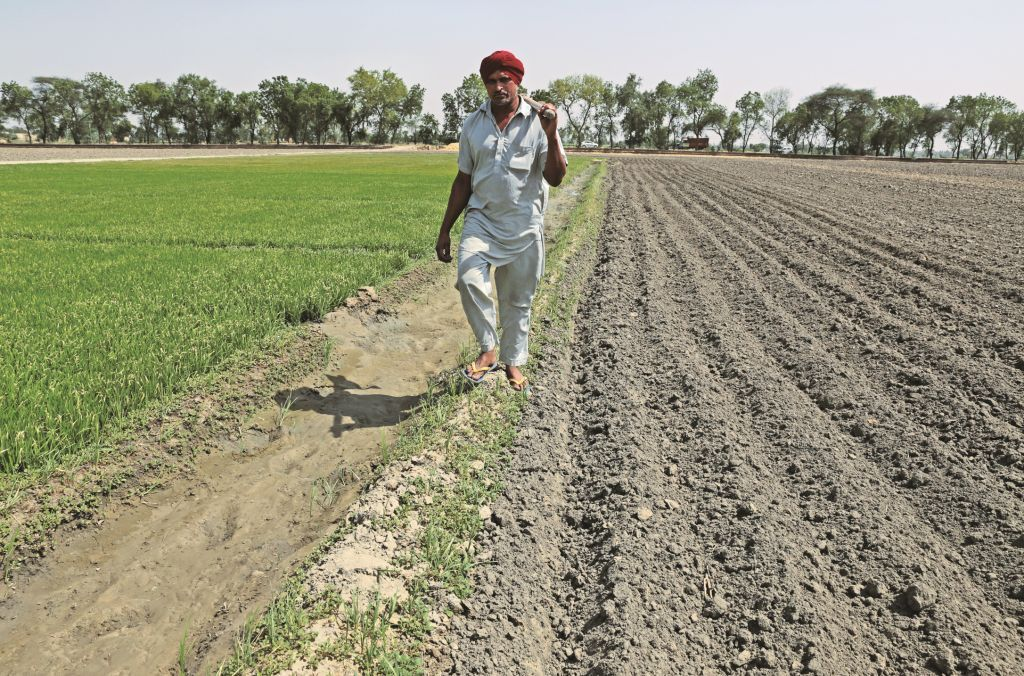 Bhima Singh of Jethuka Village keeps his field (right) ready for transplanting paddy saplings (from left)  (Vikas Choudhary/CSE)