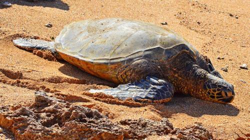 Over 150 turtles found dead on Odisha beach
