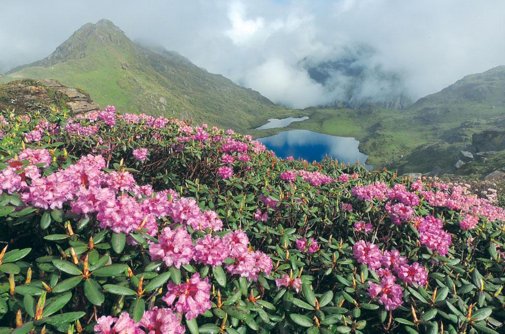 The Sikkim Himalaya hosts about 38
