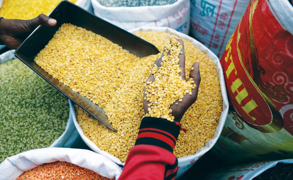 For low-income groups, khesari dal is the cheapest source of protein (Photo: Vikas Choudhary)