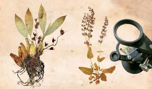 Where dry gardens wilt