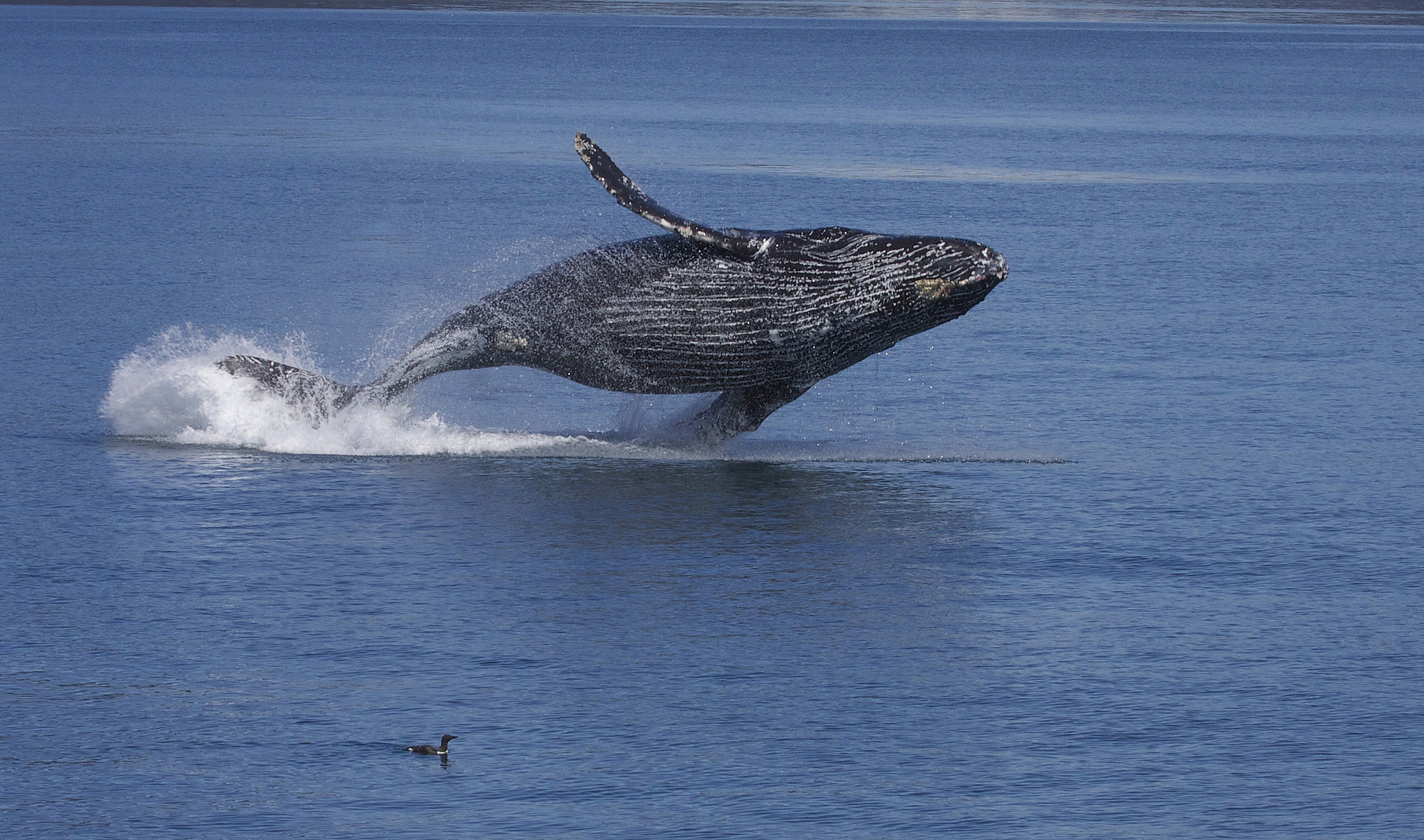 US issues warning against boating as dozens of whales frolic in San Francisco waters