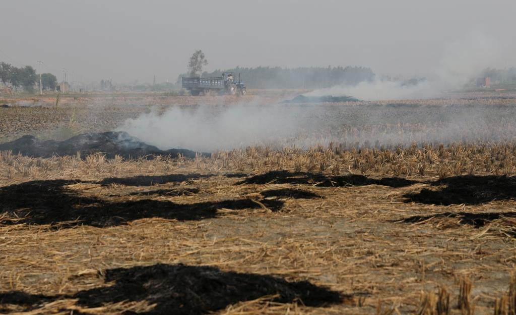 Paddy stubble, seen burning at Panipat in Haryana (Photo: Vikas Choudhary)