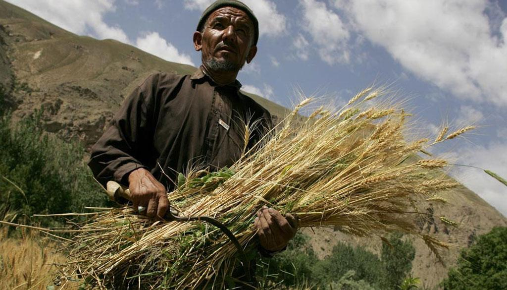 Family farmers contribute immensely to food security and global poverty eradication  (Credit: FAO)